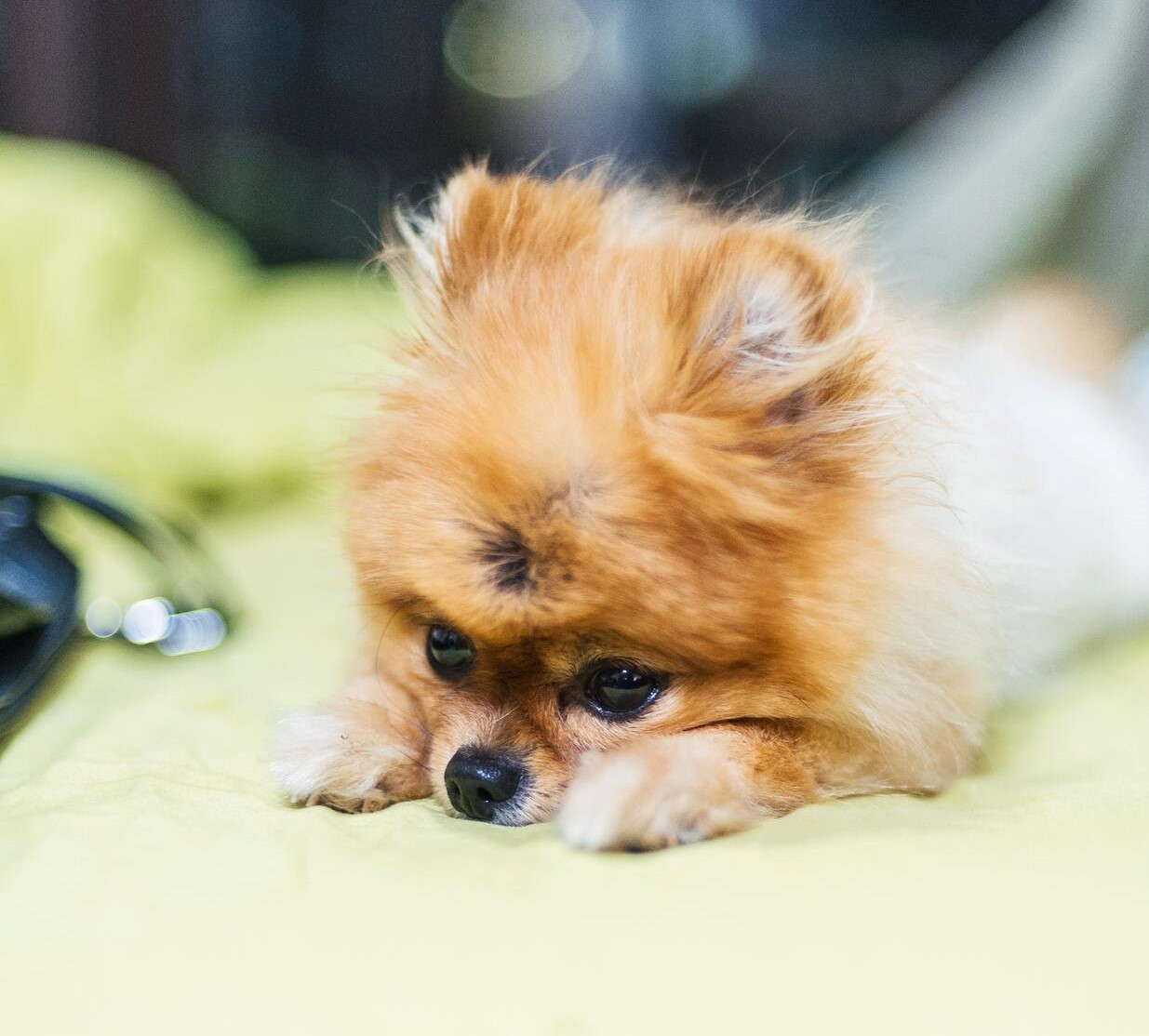 https://buttondoggrooming.com.au/wp-content/uploads/2020/06/Blog_Common-Skin_Cute-as-a-button-Dog-Grooming1157edited.jpg